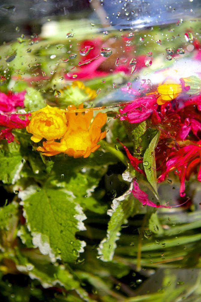 Calendula, An Edible & Medicinal Flower Calendula