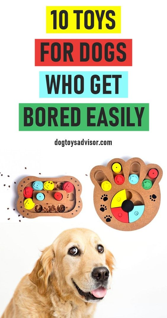 Is Your Dog Bored Keep Your Dog Busy While At Work With One Of