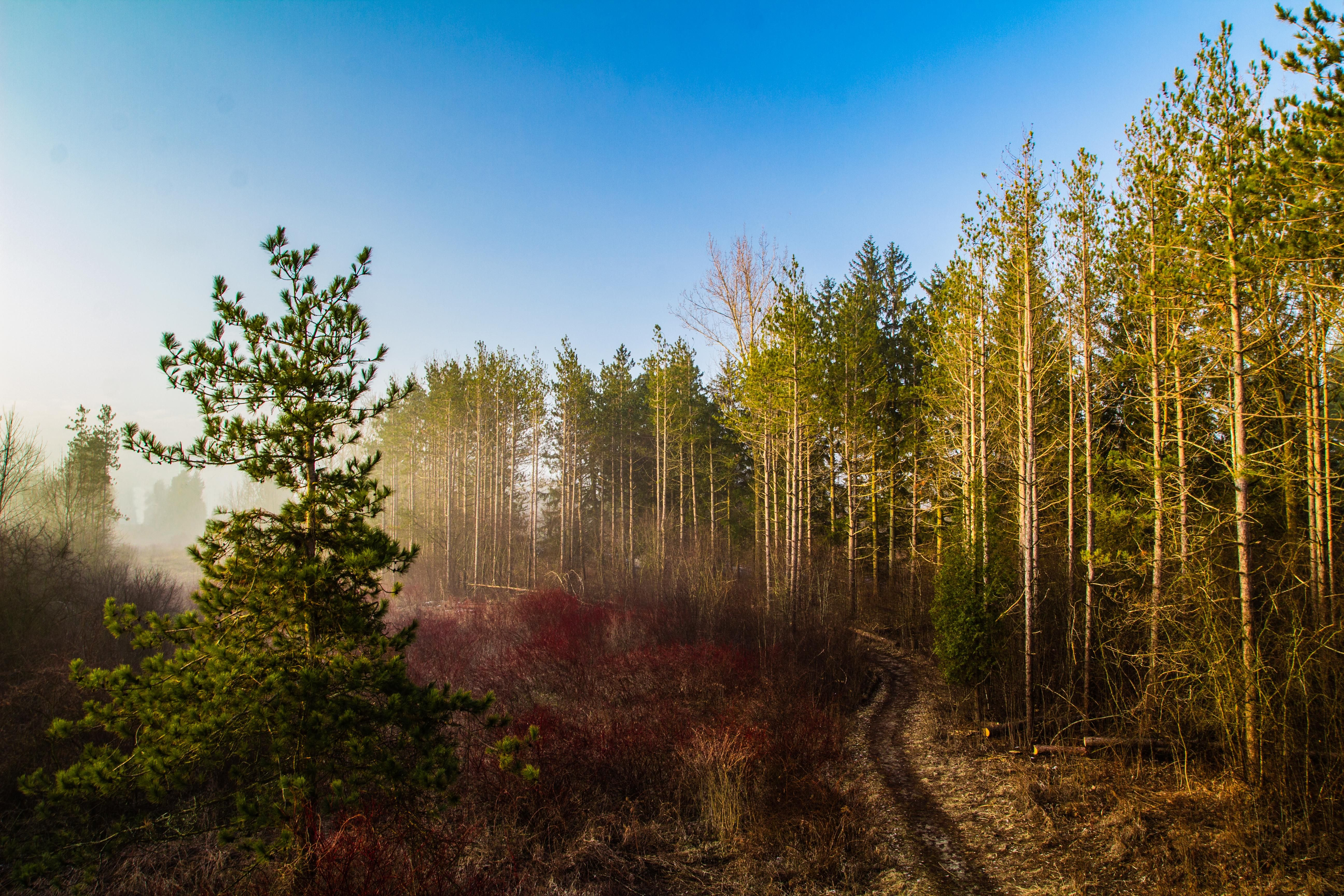 A Picture From An Early Morning Walk Waterloo Ontario Oc 51843456 Landscape Photography Landscape Nature Photography