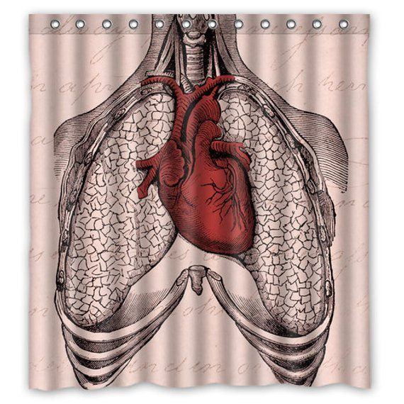Anatomy Heart Lungs Shower Curtain