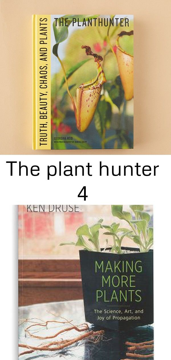 The plant hunter 4 The Plant Hunter  Terrain Making More Plants Low Light Indoor Plant Liriope Care Info Discover 17 privacy bushes and shrubs that are perfect for screen...