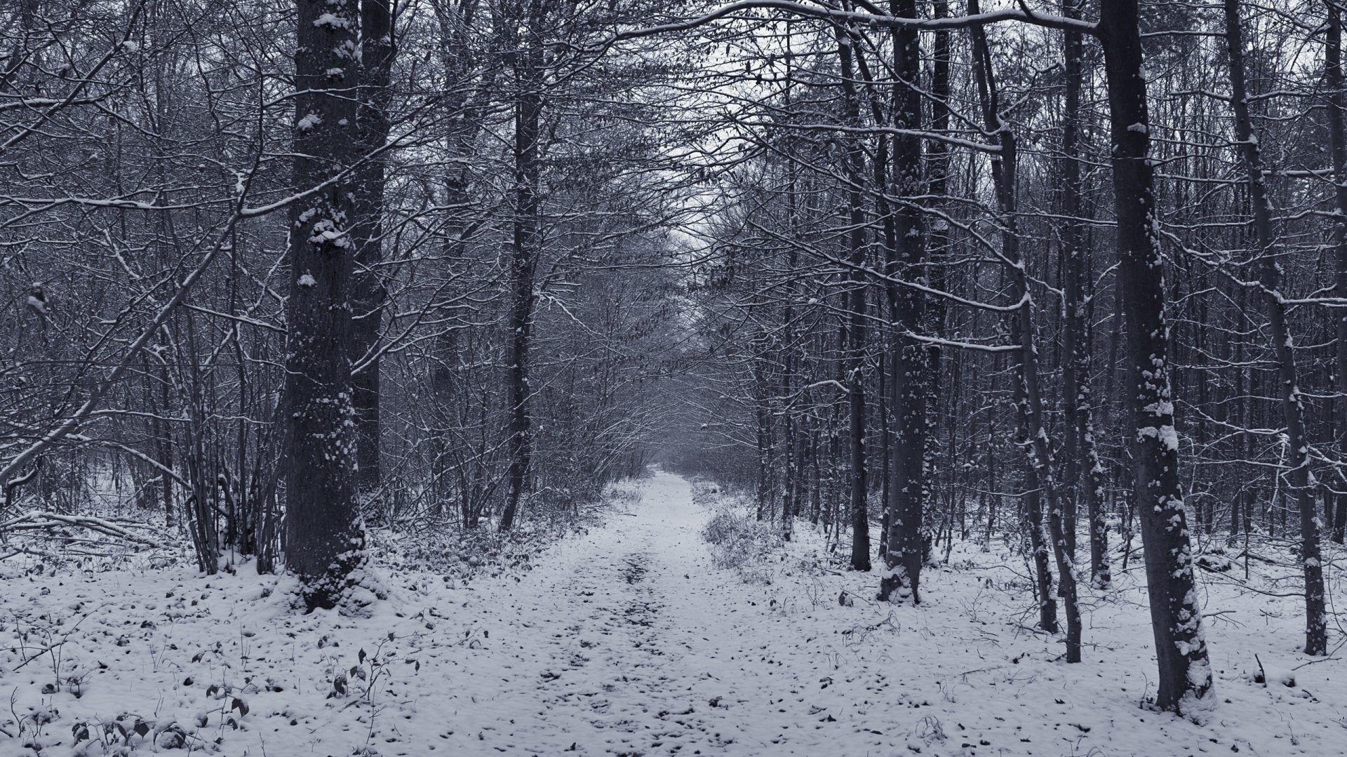 Tracks Spruce Pine Winter Forest Track Snow Winter Scenery Winter Wallpaper Desktop Winter Wallpaper