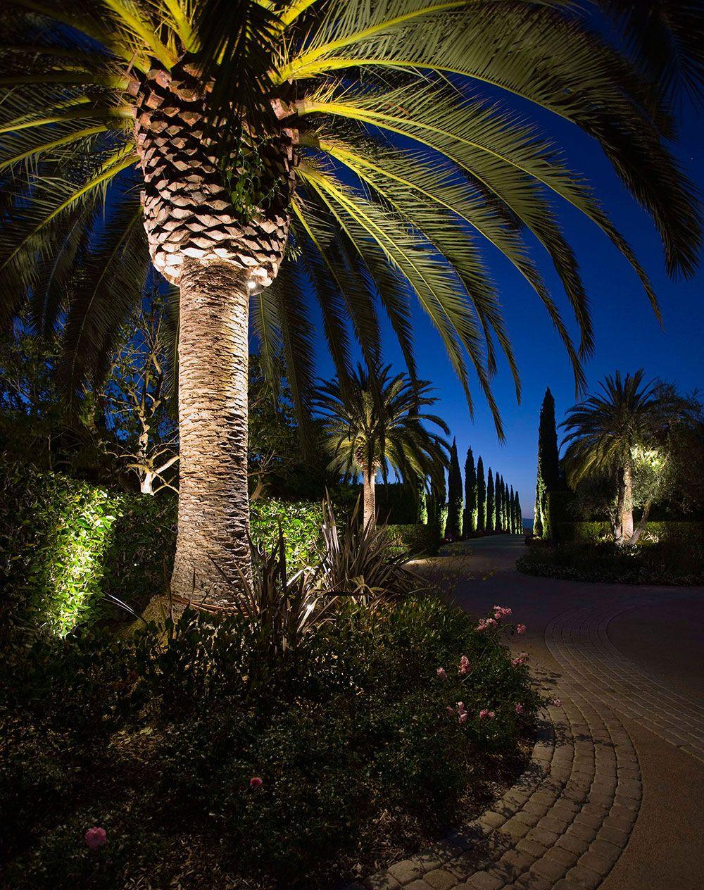 Kichler Landscape Light Focal Points- Tropical Focus | My dream ...