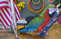 this bird show may service our area. may use for event also good for rainforest event