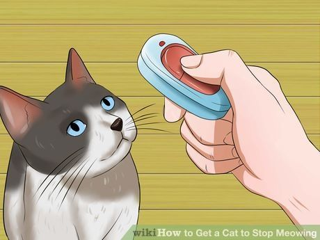 Get A Cat To Stop Meowing I Love Cats Cats Cats Meow