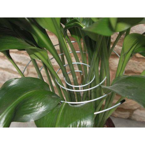 Tuteurs Spirale En Acier Pour Plantes Les 3 En 2020 Plante