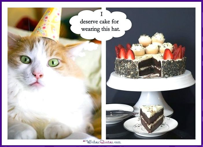 Funny Happy Birthday Cat Meme : Happy birthday memes with funny cats dogs and cute animals