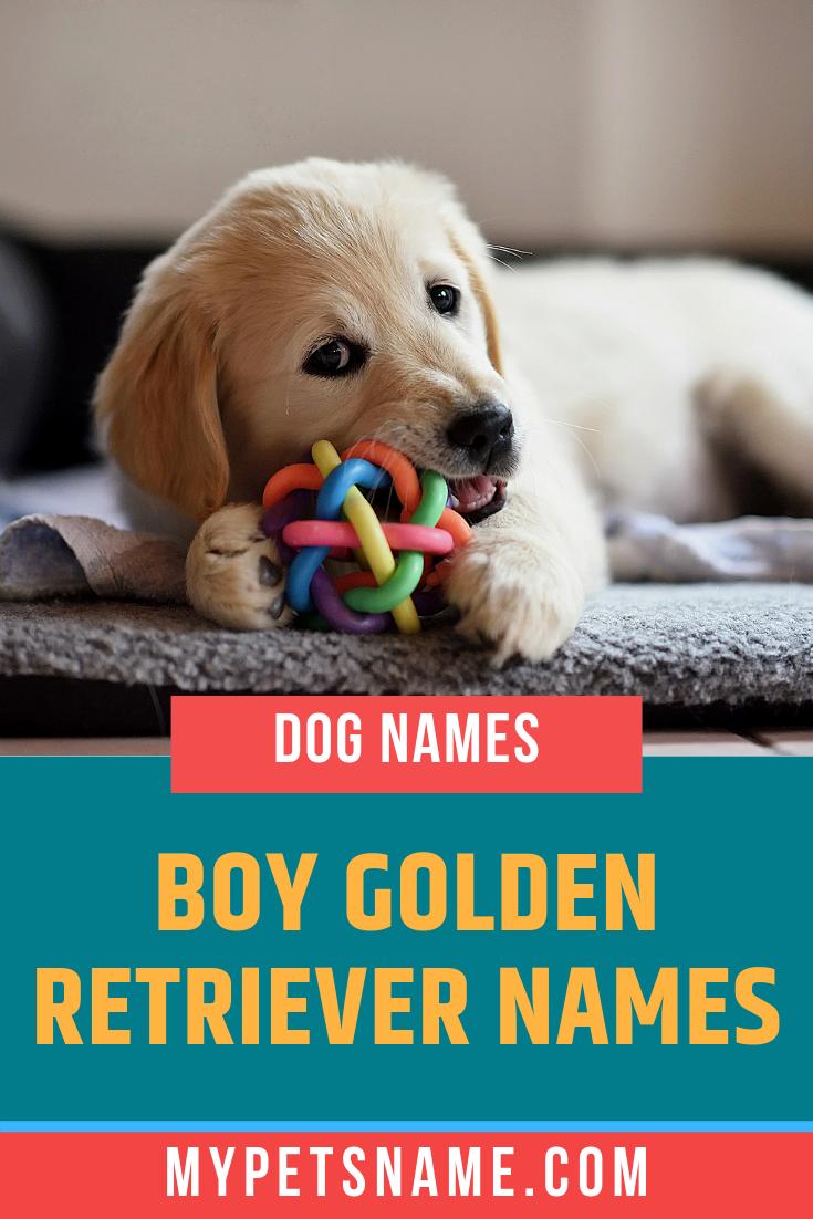 Boy Golden Retriever Names Golden Retriever Names Boy Dog Names Golden Retriever Funny