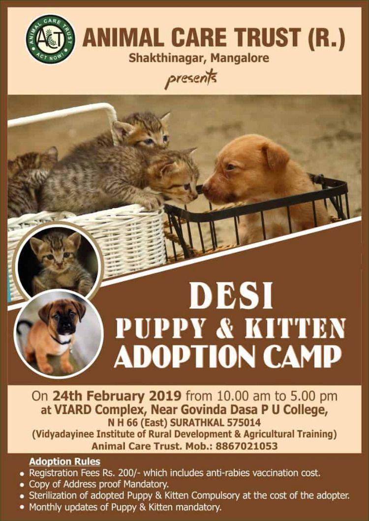Pin By Mangaluru On Events Near You Kitten Adoption Puppies Kitten