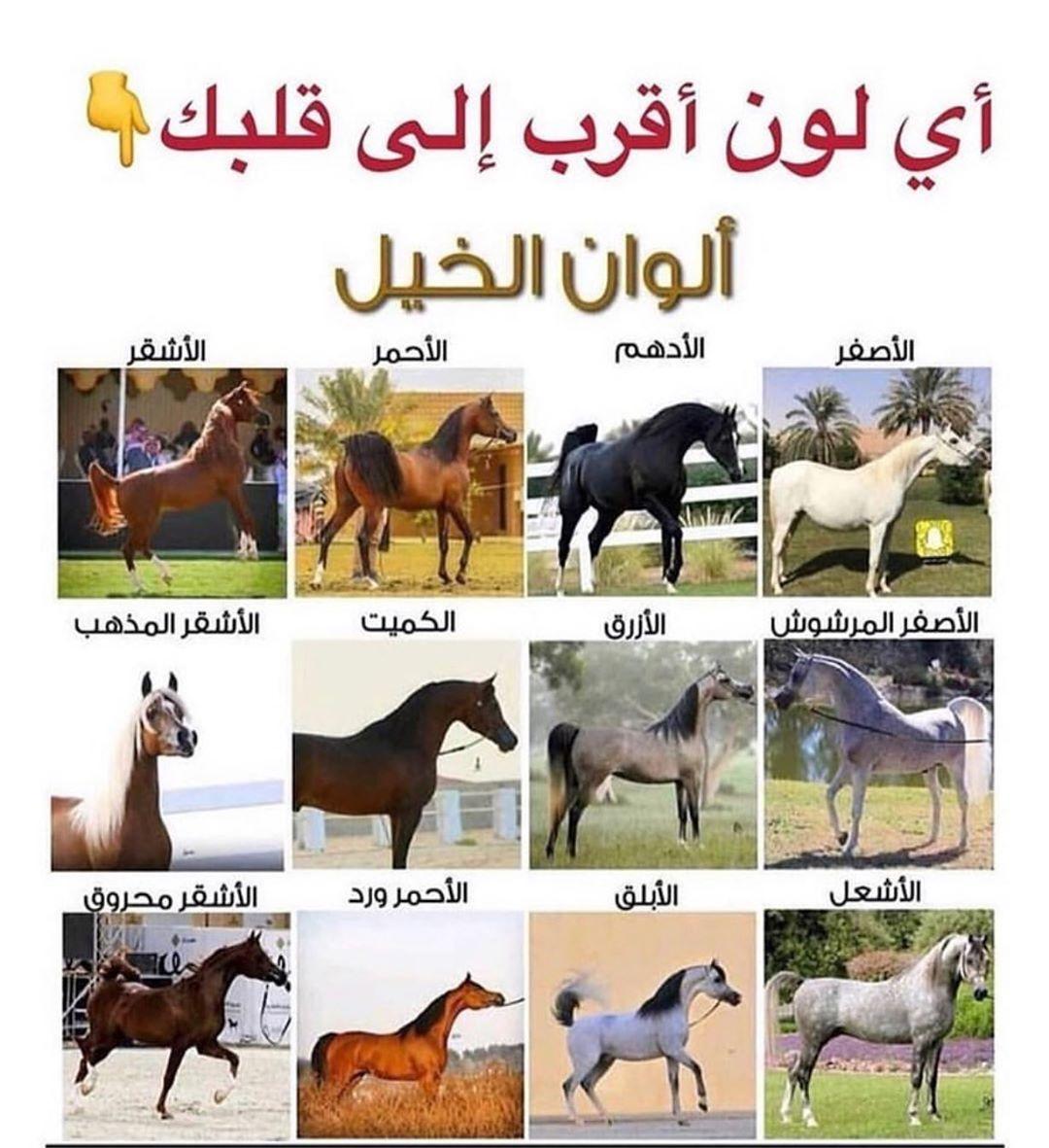 الأشقر و الازرق Follow Us Stud386 Like The Post Mention Your Friend الاعل Beautiful Horses Animals Horses