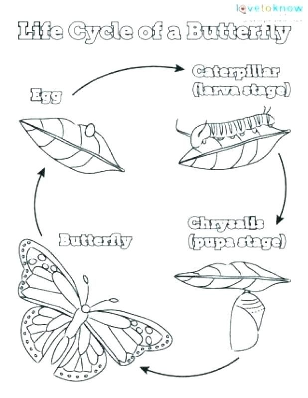 Related image | Butterfly coloring page, Butterfly life ...