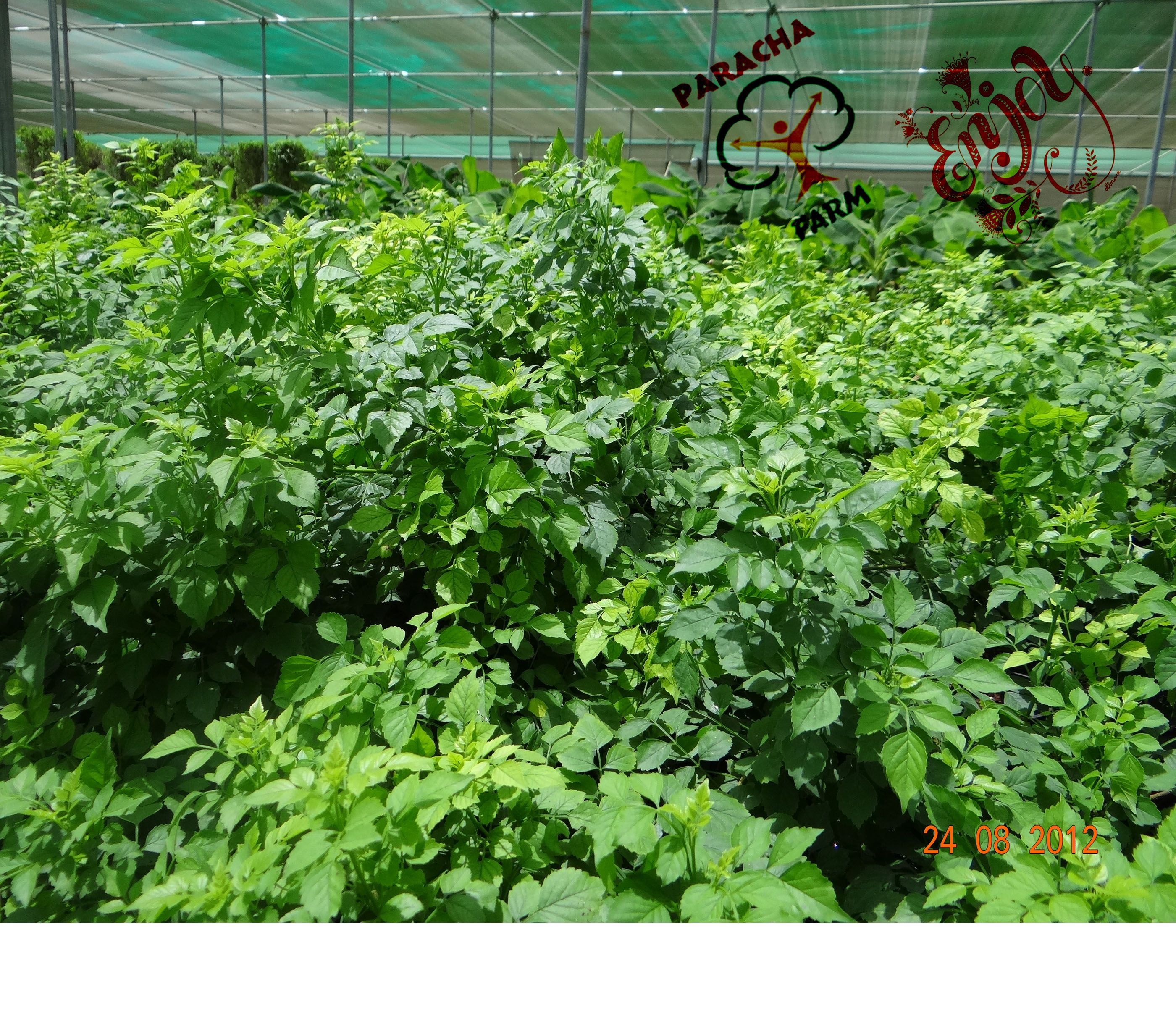 Ground Cover Shrubs!!! Dense And Fast Growing Plants Are
