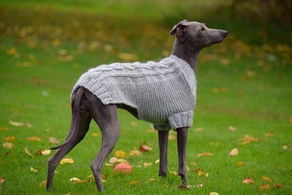 Italienische Greyhound Classic Pullover hellgrau / Wald