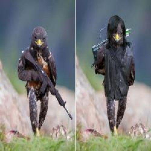 Esse falcão provocou a maior batalha de photoshops da internet (21 fotos)