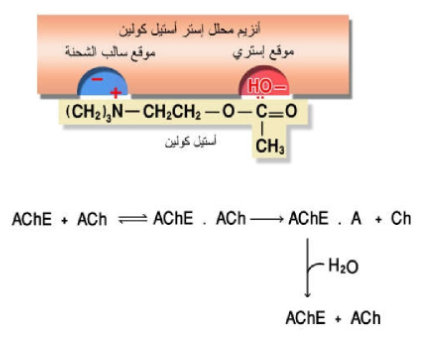 Pin By Chemistry On الحيوية In 2021 Neurotransmitters Math Math Equations