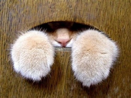 I know you are in there! Cute animals, Cat paws, Crazy cats