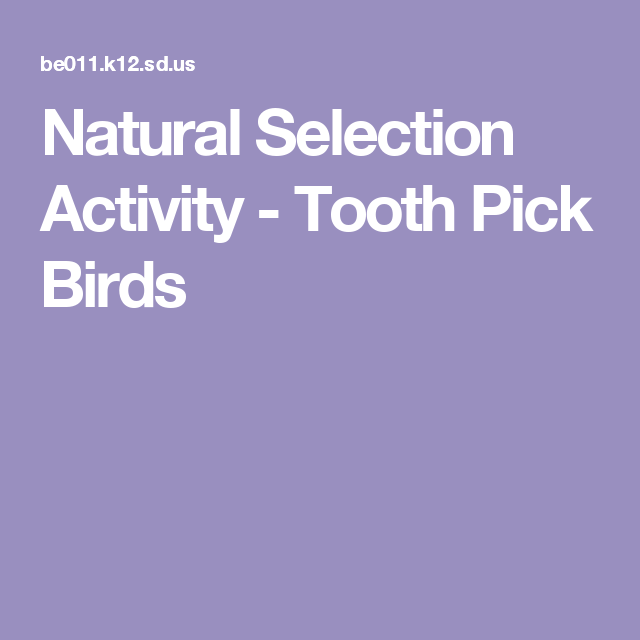 Translated Version Of Http Derjulian Net Projects Roboking: Natural Selection Activity - Tooth Pick Birds