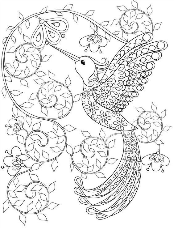 Hummingbird Coloring Pages For Adults Coloring Books Pinterest