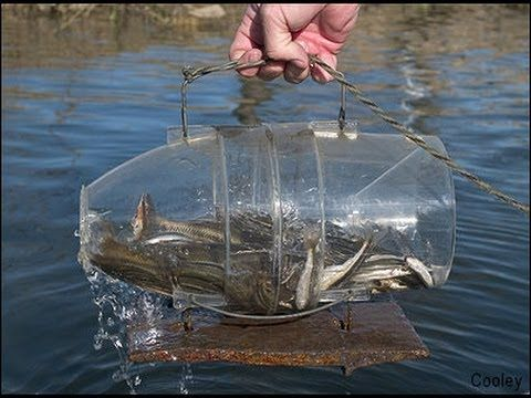How to make a minnow trap youtube fishing freshwater for Bait fish trap