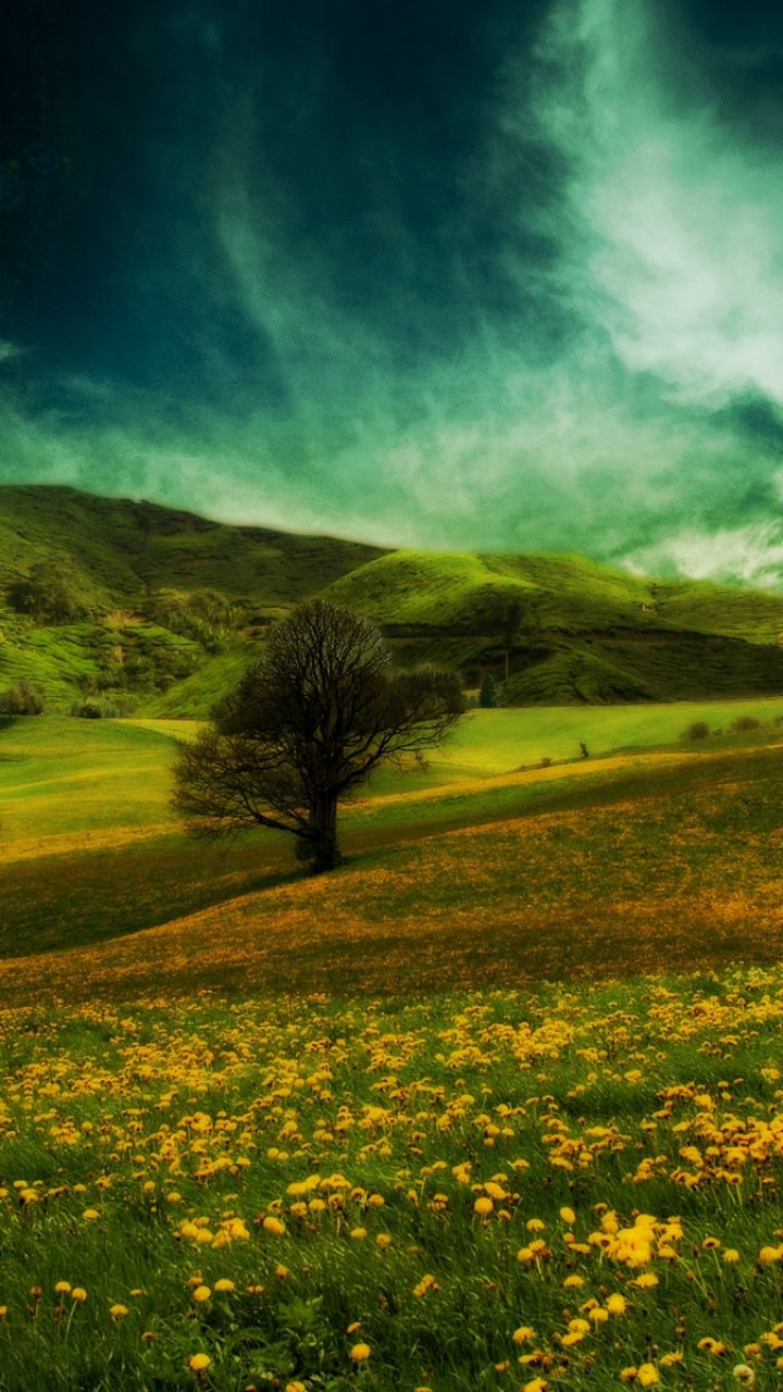 Download Wallpaper 720x1280 Field, Hills, Flowers