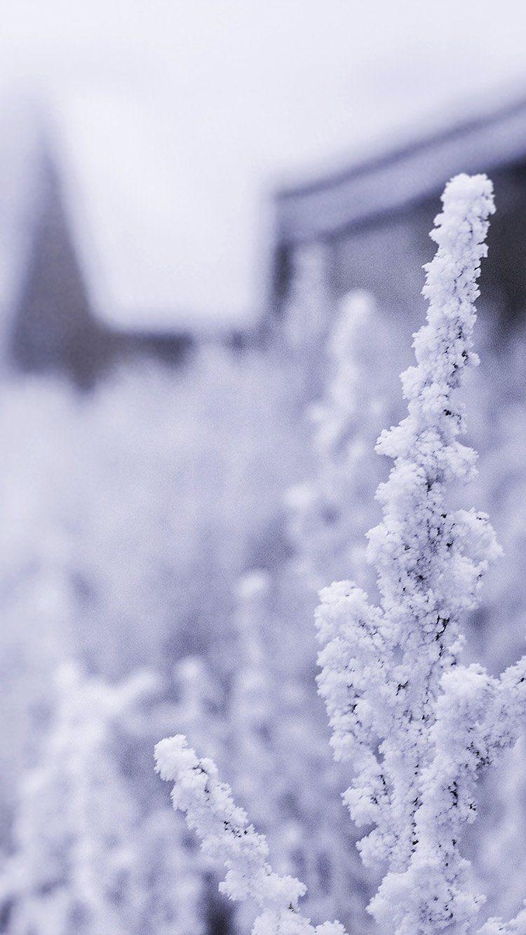 Snow White Winter Flower Blue Wallpaper Hd Iphone Iphone
