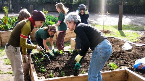 The Stephanie Alexander Kitchen Garden Foundation Growing