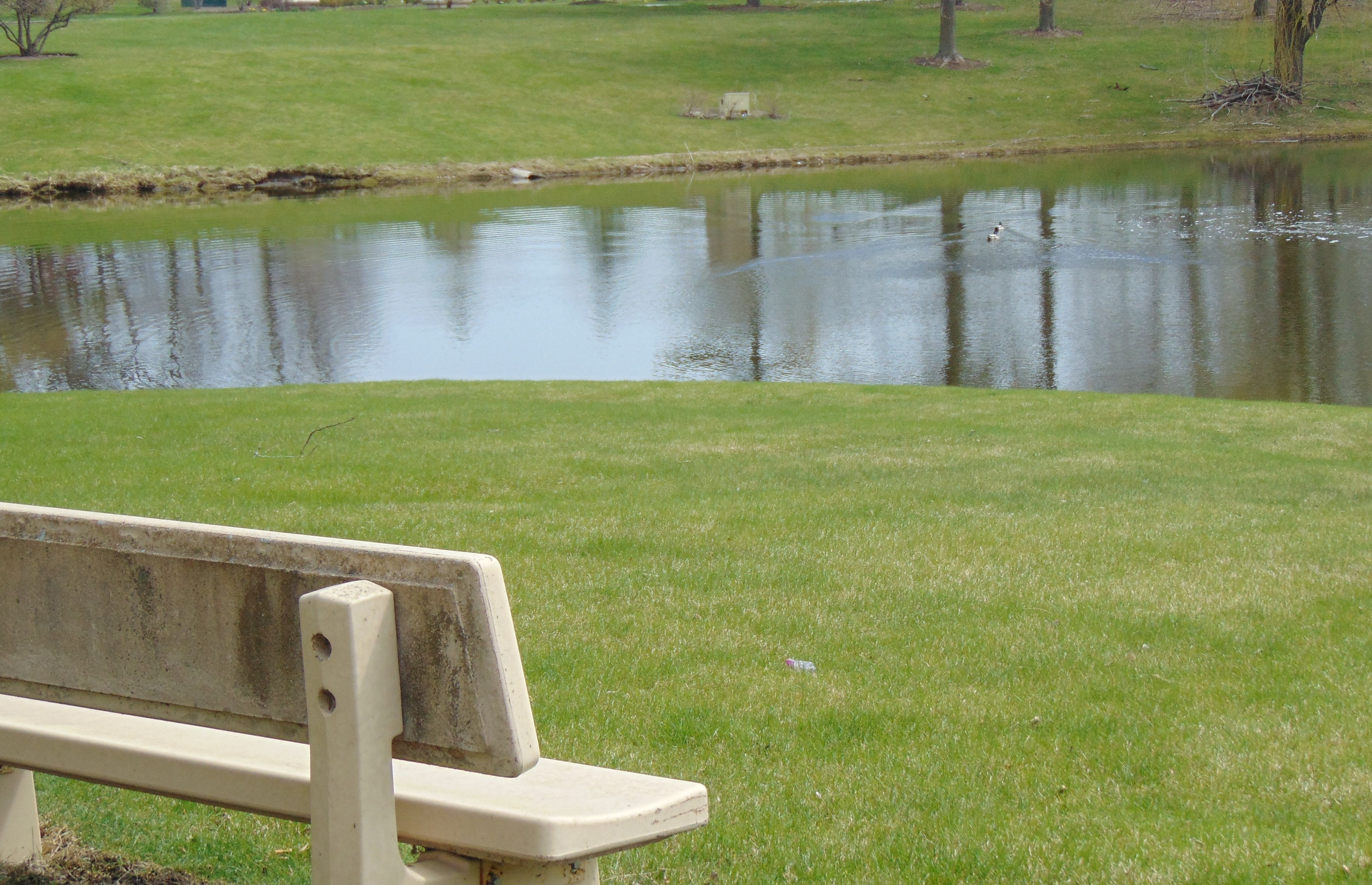 Retention ponds are a necessity that can landscaped to ...