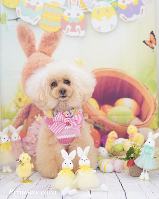 Princess Coco Suzuki On Instagram Princess Cocoオリジナル撮影ブースでもお写真撮らせてもらったよ レイラちゃん 可愛い Egg Hunt Christian Holiday Easter Bunny