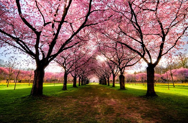 Pin By Cher Day On Trees Tree Photography Beautiful Tree Blossom Trees