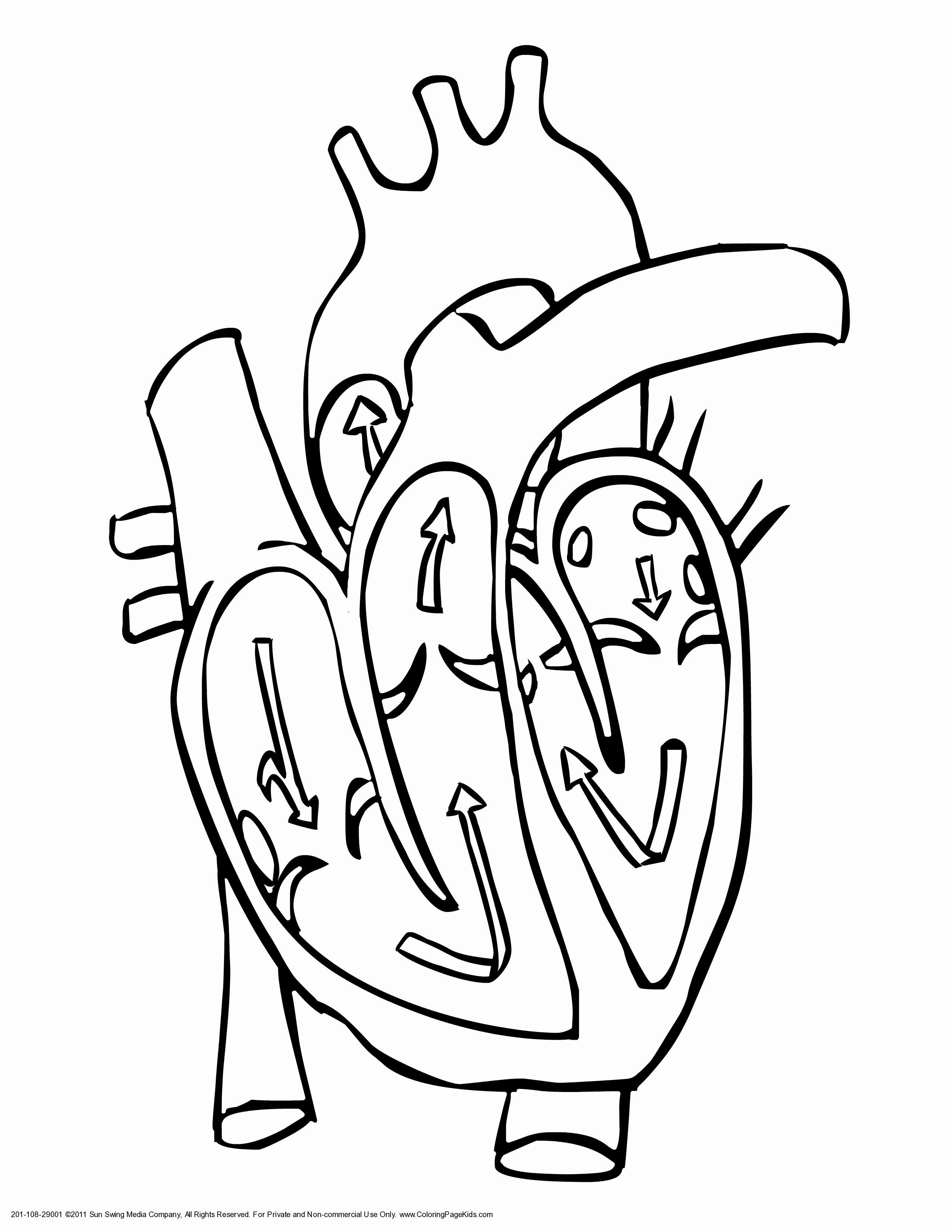 Heart Anatomy Coloring Worksheet Lovely Collection Of