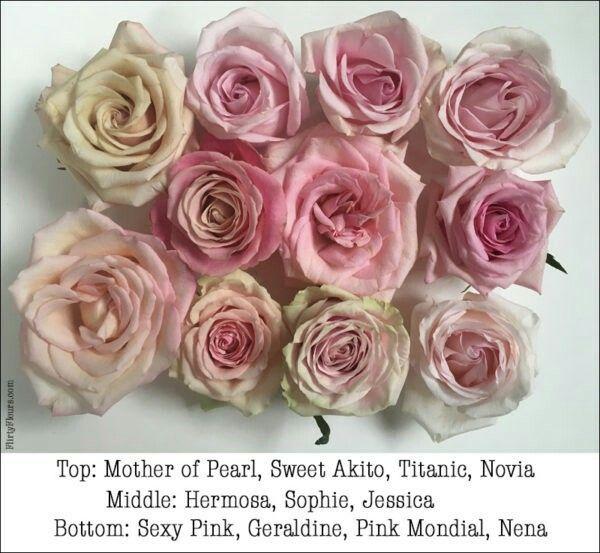 Pink Rose Study Pink Rose Flower Rose Varieties Flower Guide