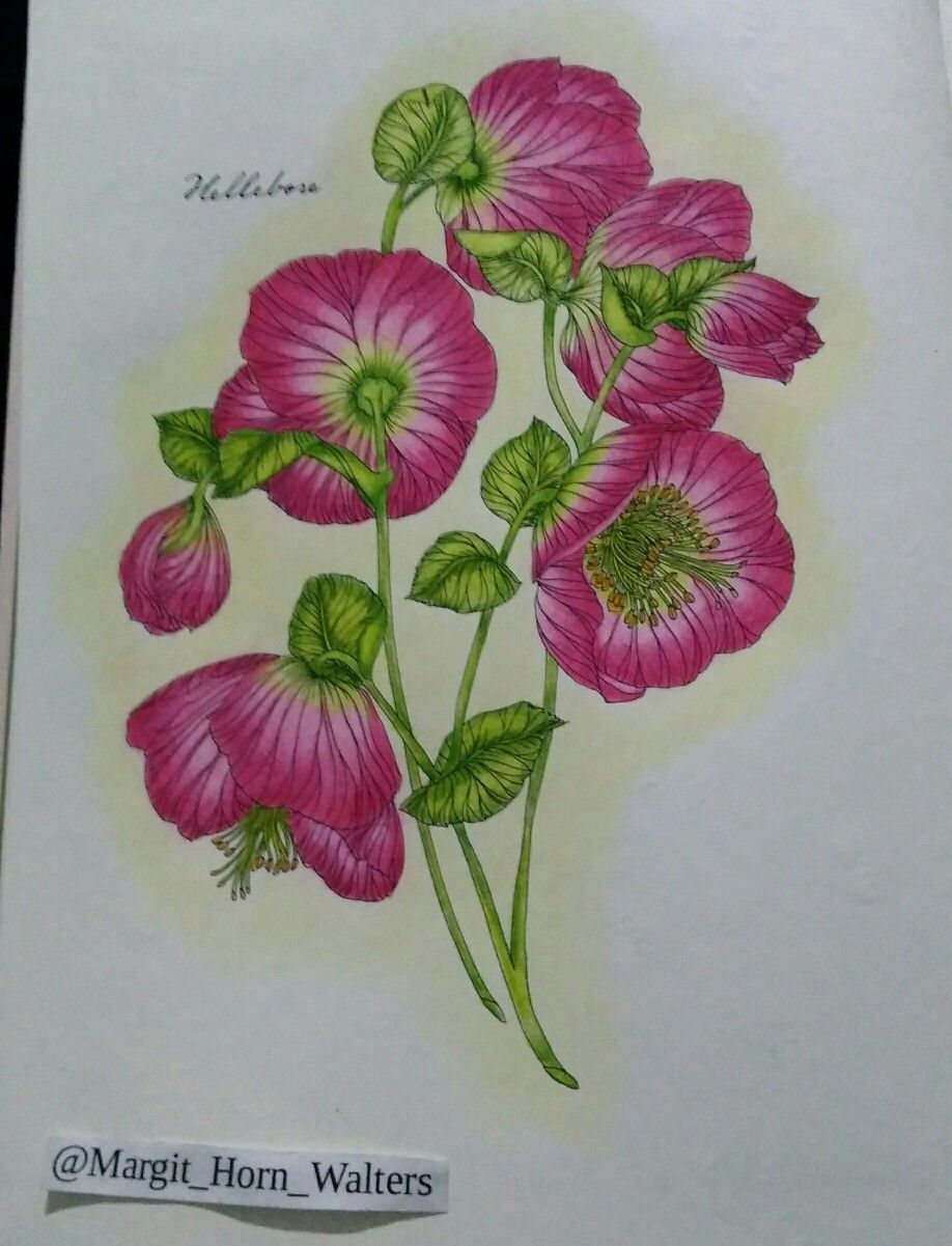 The flower year de leila duly floral colouring pages pinterest