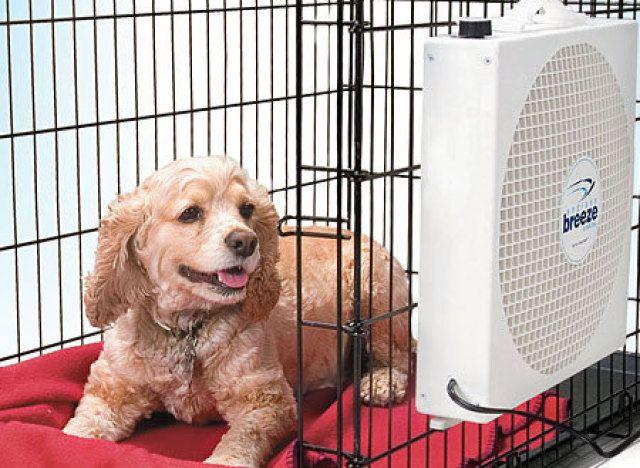 An Endless Breeze Pet Fan Will Keep Fido Comfortable Too Cool