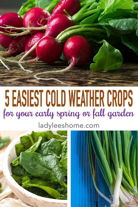5 Easiest Cold Weather Crops To Grow In The Home Garden 640 x 480