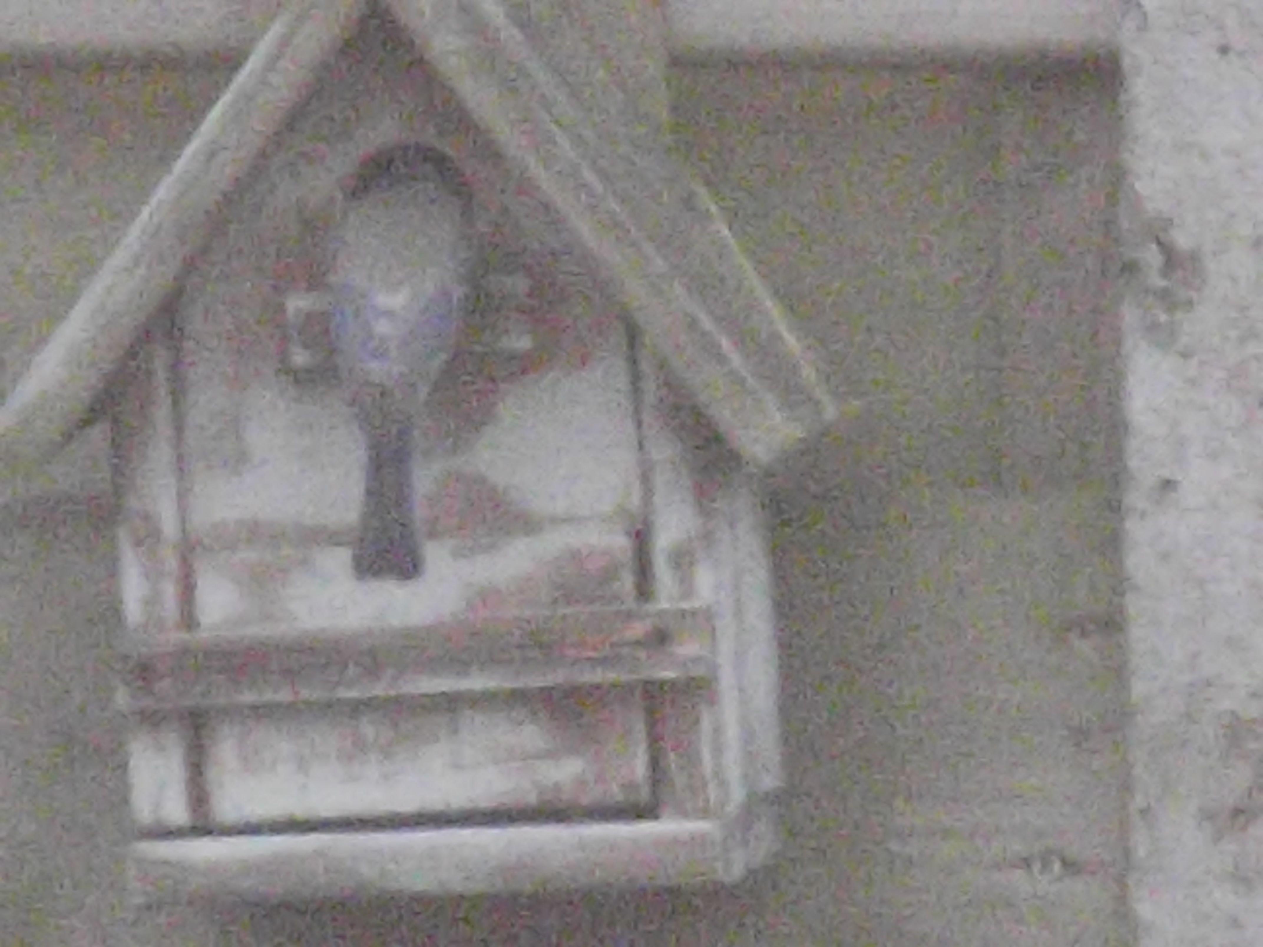 De blauwe pimpelmees zijn aan hun 2de nest bezig ! :)  Les mésanges bleues font leur 2ème nid cette année ! ;)