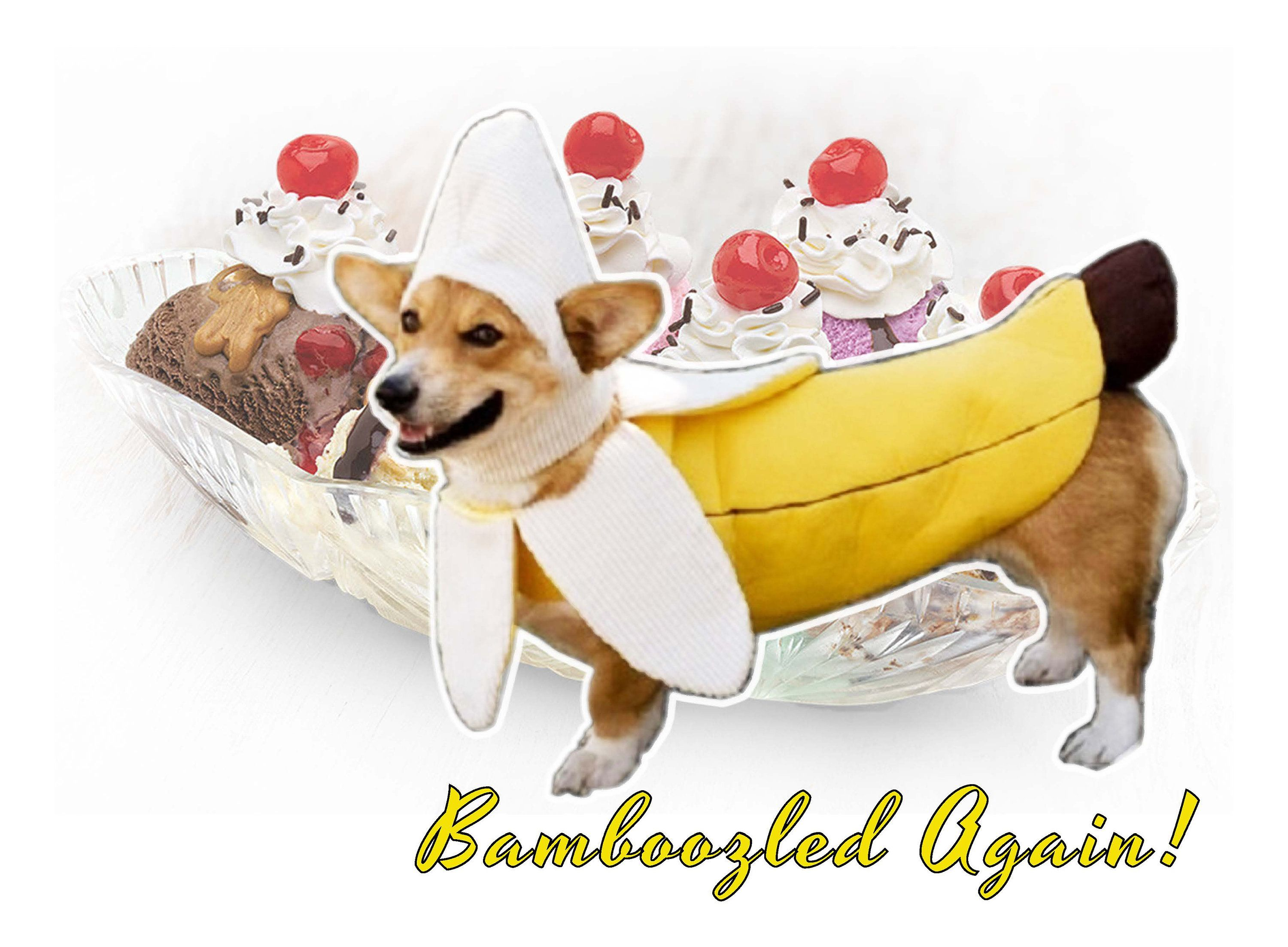 Meme Poster Bamboozled Again Wall Art Dog Fruit Outfit Cute