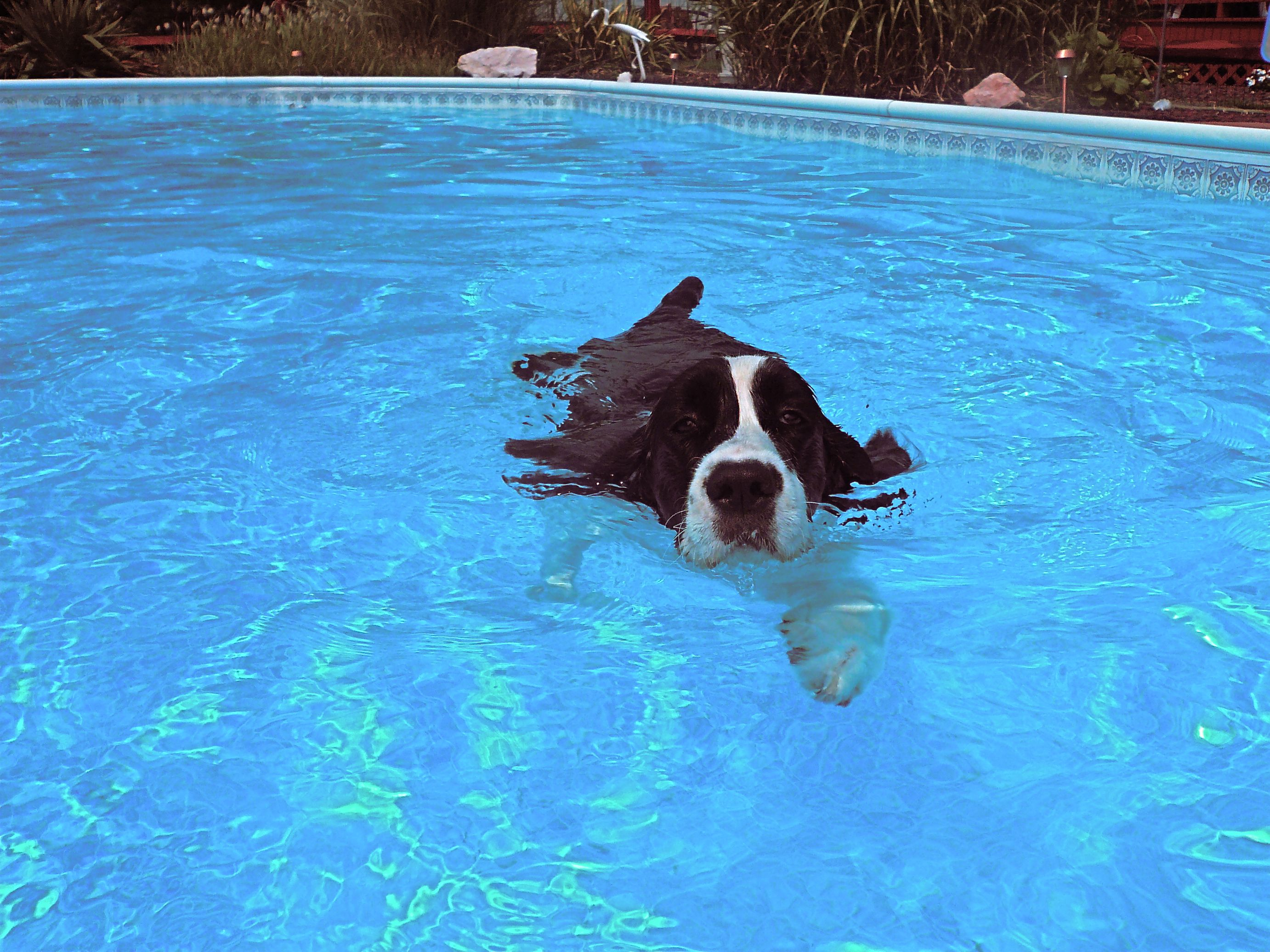 Nothing more relaxing than frolicking in the pool!