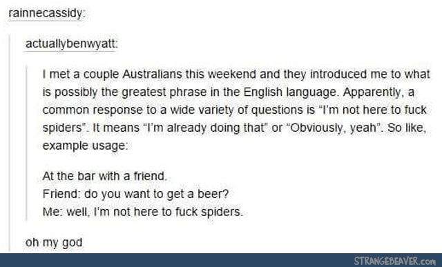 Funny tumblr post tumblr stuff pinterest bears woods and random lmaoso its the australian version of does a bear go to the bathroom in the woods im not here to fuck spiders is the answer publicscrutiny Choice Image