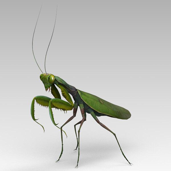 3dsmax Praying Mantis Praying Mantis Mantis Tattoo Curious Creatures