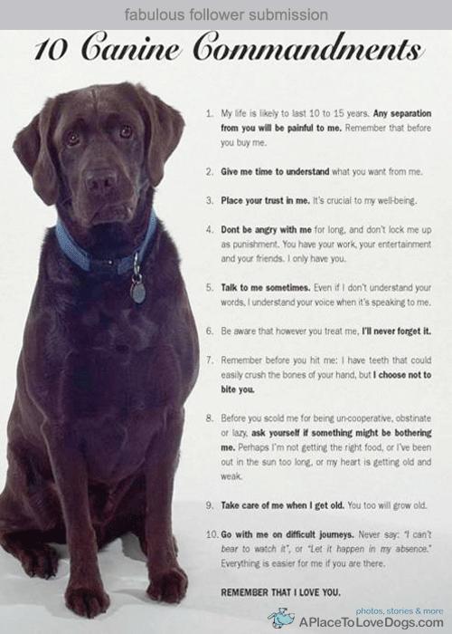 10 Canine Commandments 10 Canine Commandments.10 Canine Commandments.