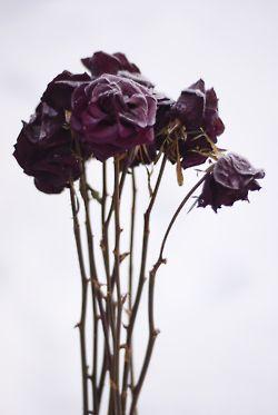 Les Fleurs Fanees Fleur Pinterest Flowers Purple Roses Et