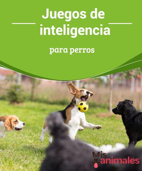 Juegos De Inteligencia Para Perros Mis Animales Perros Adiestramiento Perros Entrenamiento Perros