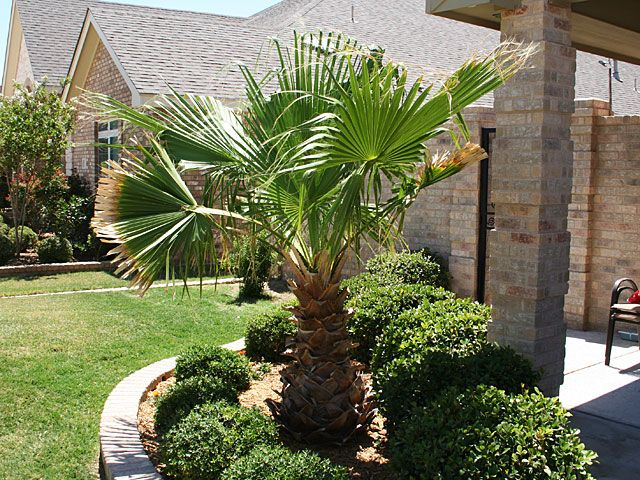 11 Tropical Front Yard Landscaping Ideas with Palm Trees