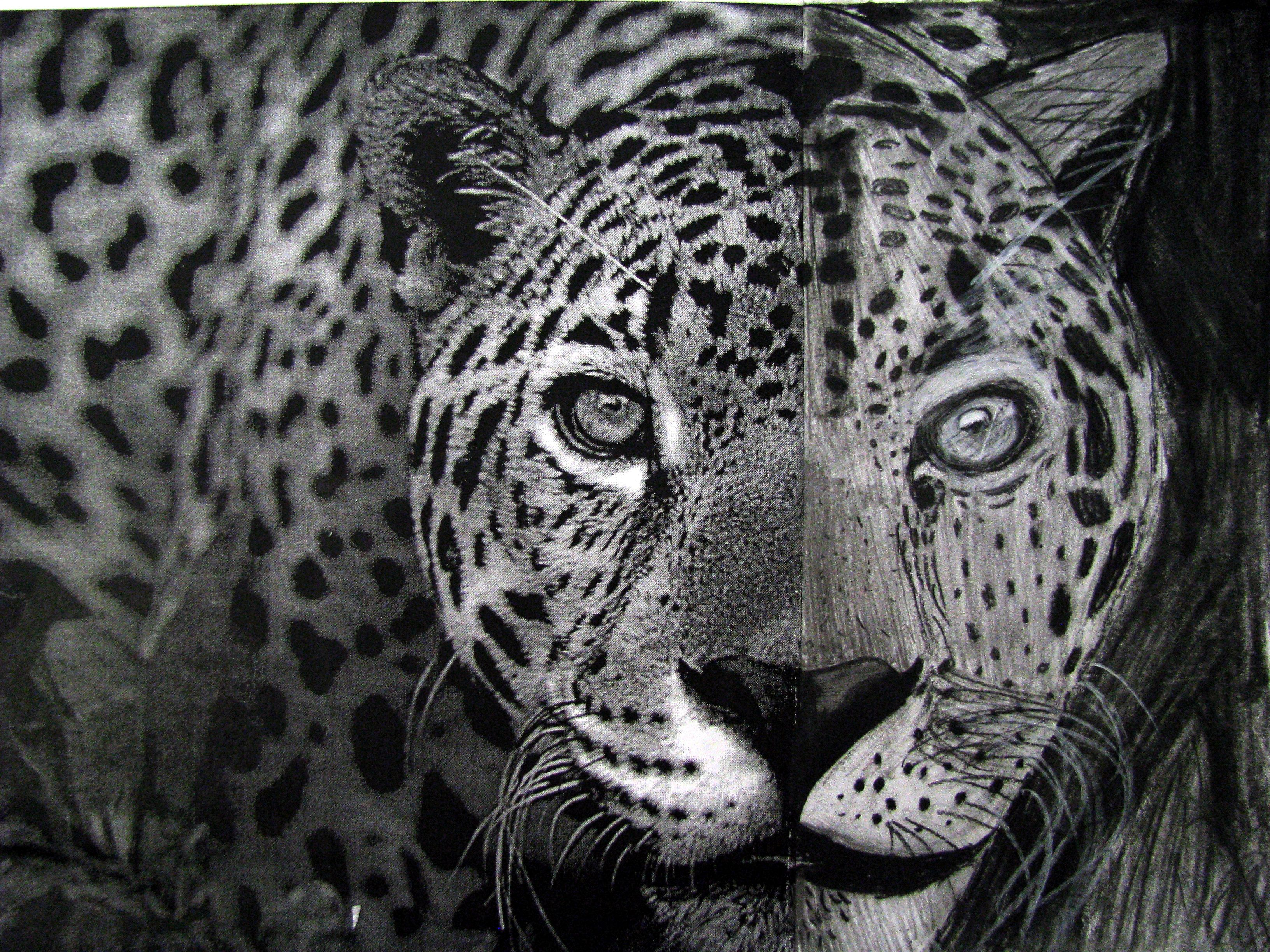 Complete The Animal Charcoal Drawing Fifth Graders Are