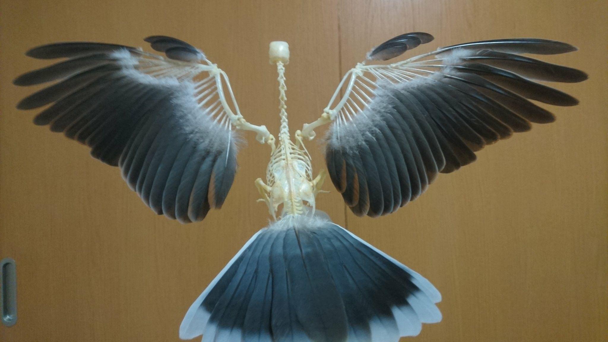 Pin de nicky liu en Birds | Pinterest | Calva, Anatomía y Animales