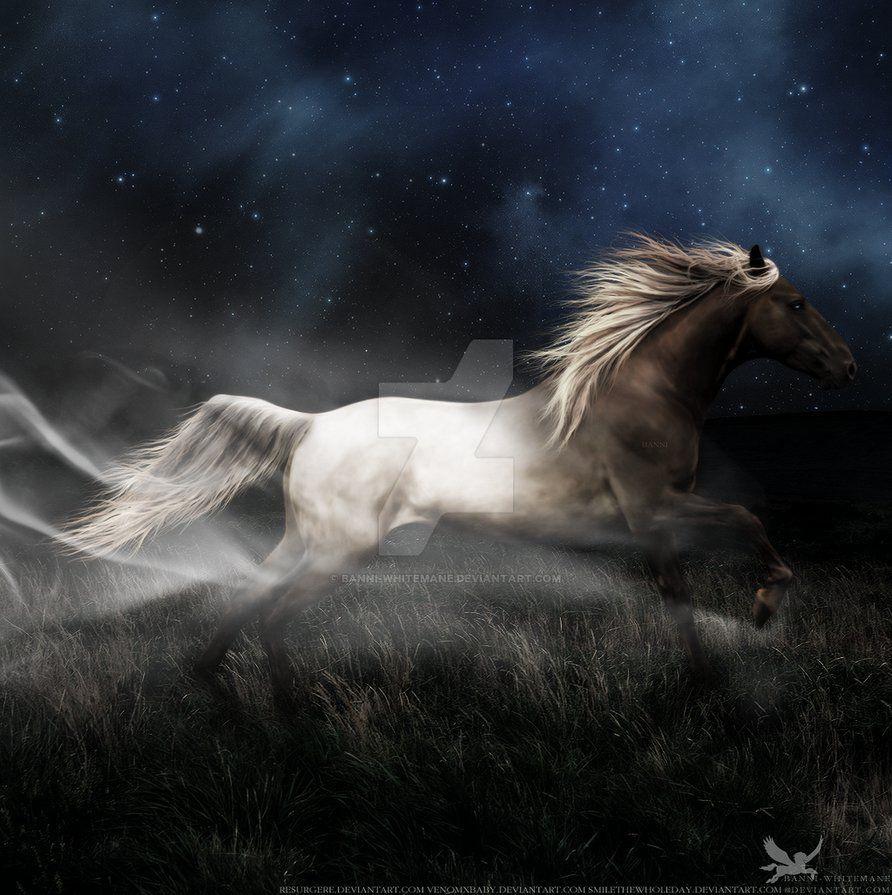 Good Wallpaper Horse Nightmare - f6e28d20bf7edd0966e998e0ea18cd14  Perfect Image Reference_934240.jpg