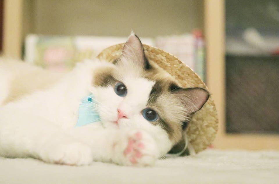Kittens Bunnies Birds おしゃれまとめの人気アイデア Pinterest Nj Sparkle かわいい子猫 子猫 猫 癒し
