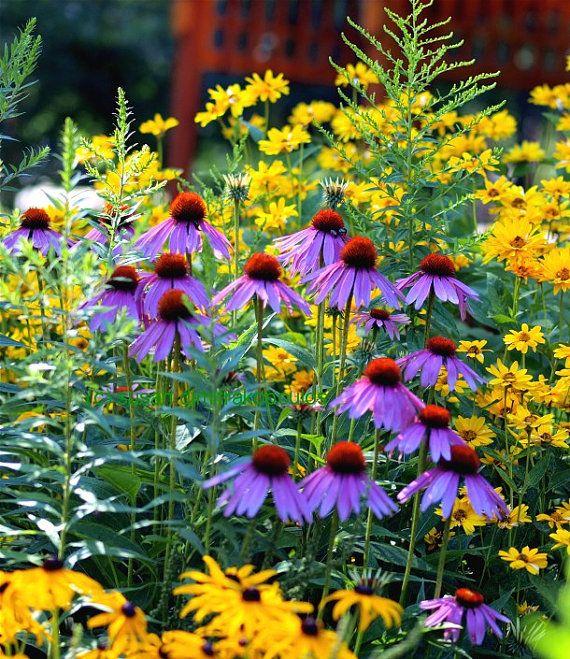 Flower Art Harmony Garden Print Nature Art Wildflowers Black Etsy In 2021 Flower Landscape Garden Print Black Eyed Susan