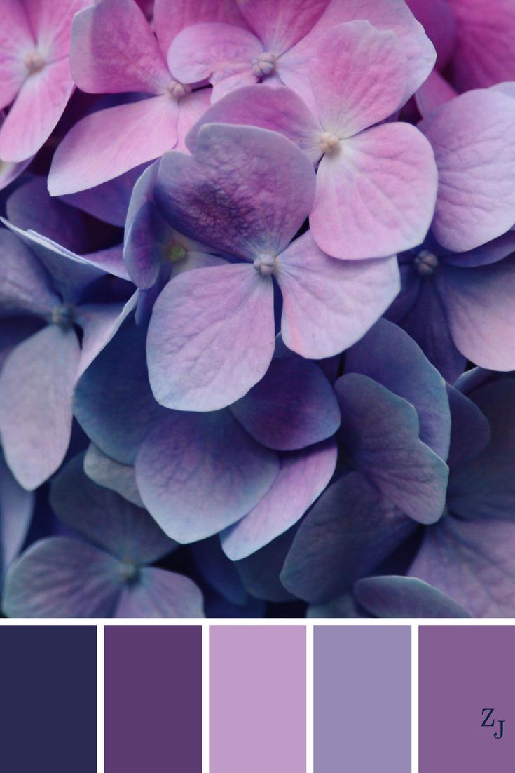 цвета фиолетовый и сиреневый фото выглядит