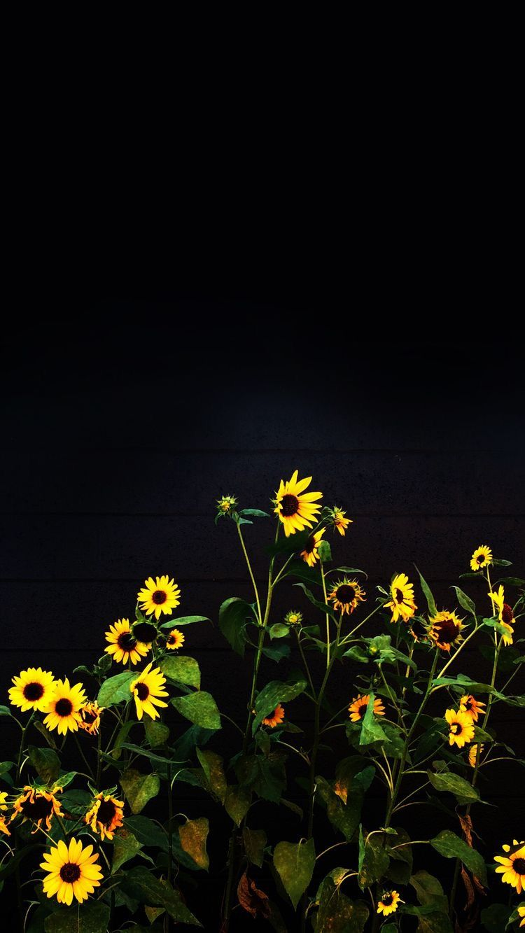 Pin By Phila On Wallpapers Sunflower Wallpaper Black Background Wallpaper Black Wallpaper Iphone